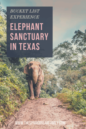 One of a Kind Trip: An Elephant Sanctuary in Texas | The Spring
