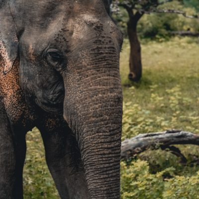 One of a Kind Trip: An Elephant Sanctuary in Texas