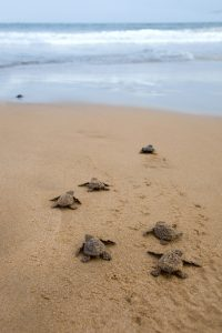 Things to do in Cabo with Kids - Baby Turtles