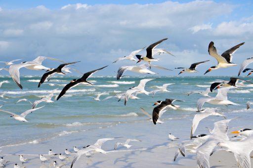 Free Things to do Galveston - East End Lagoon Seagulls